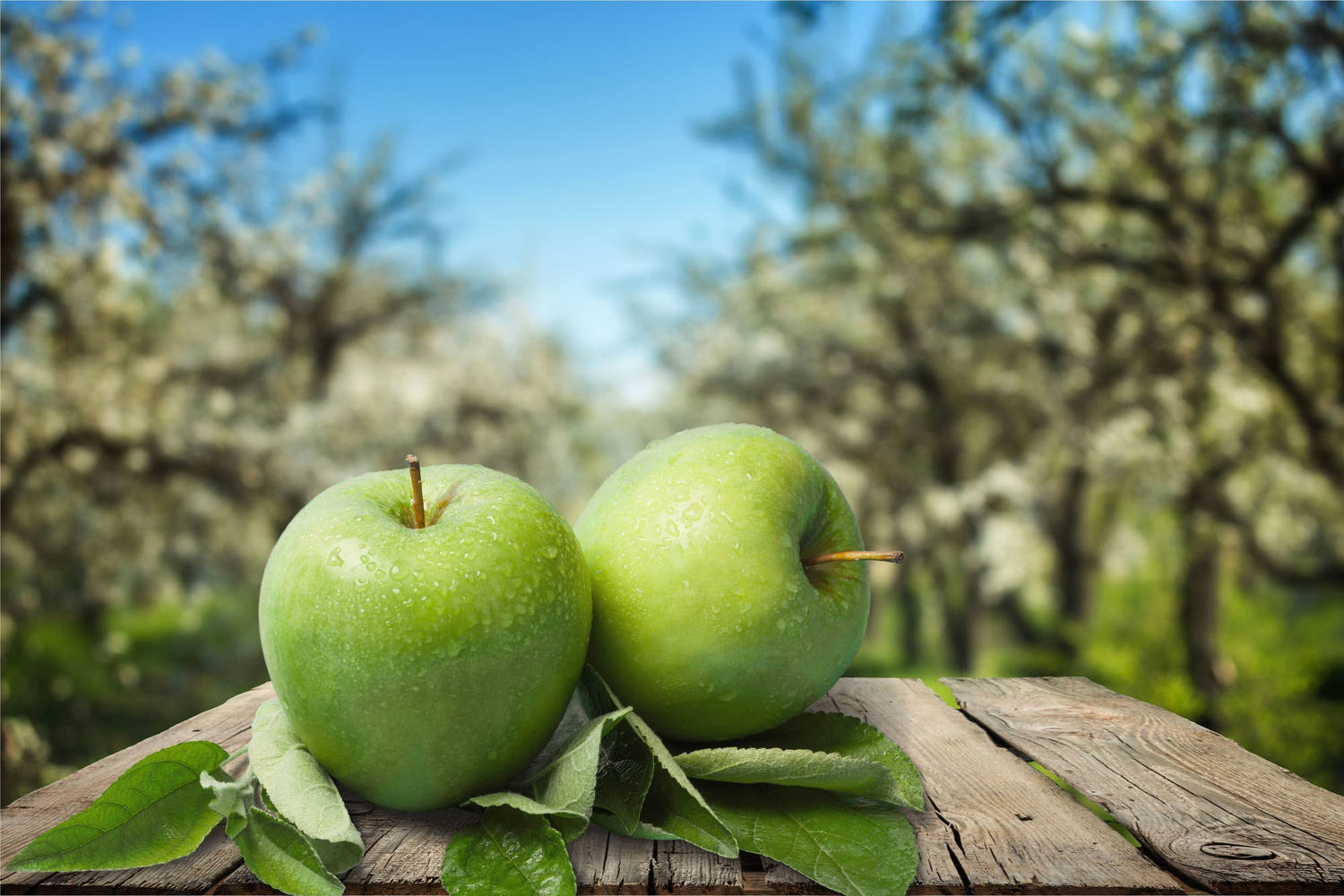 Granny Smith appels doos 18 kilogram 3