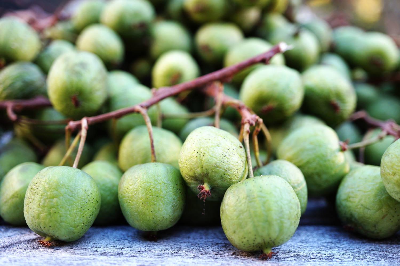 kiwiberries 125gr stuk 100361 van gelder fruit van gelder groente fruit groothandel. Black Bedroom Furniture Sets. Home Design Ideas