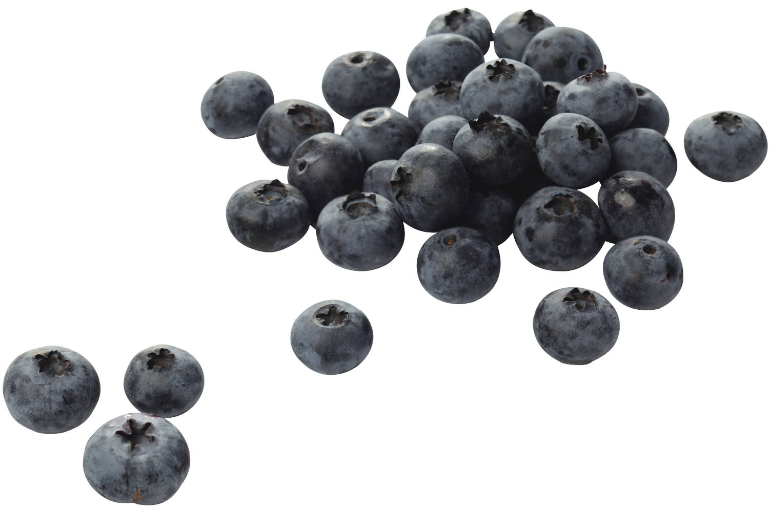 Blueberry 125 gr box 12 pieces 1