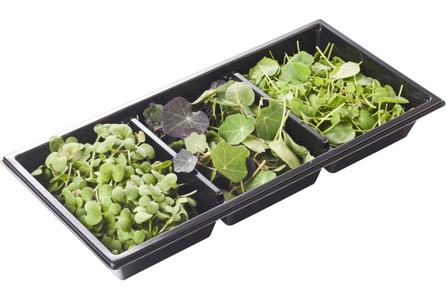 Pittige cress trio 45gr stuk 1