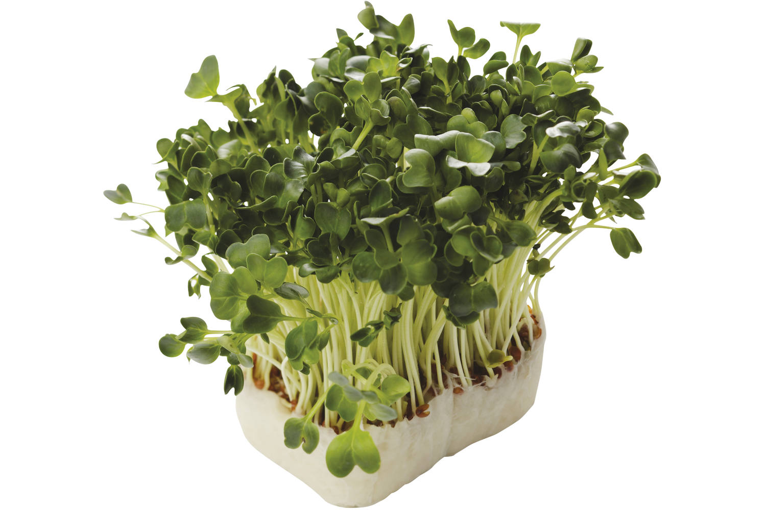 Daikon cress single stuk 1
