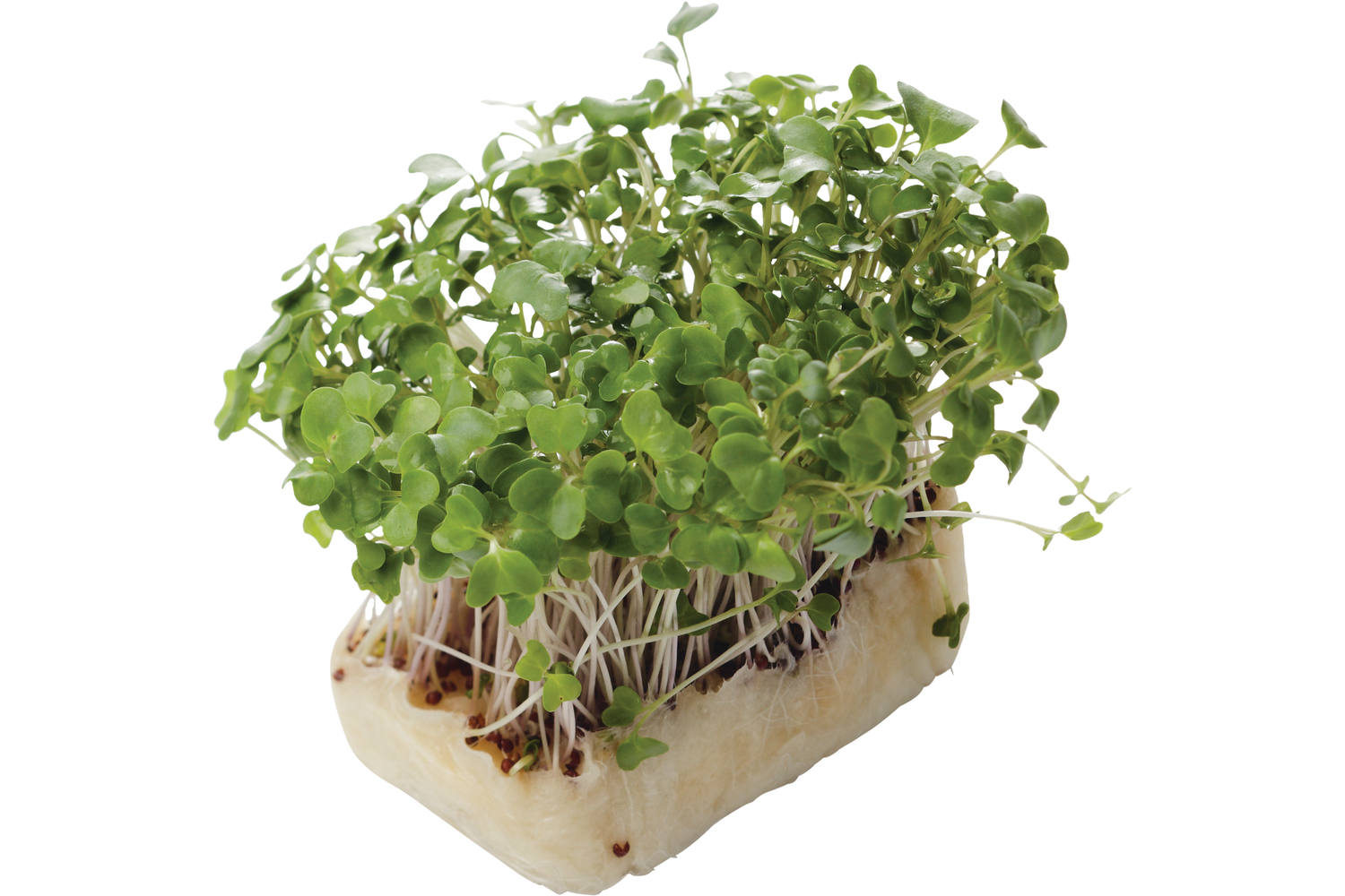 Brocco Cress stuk 1
