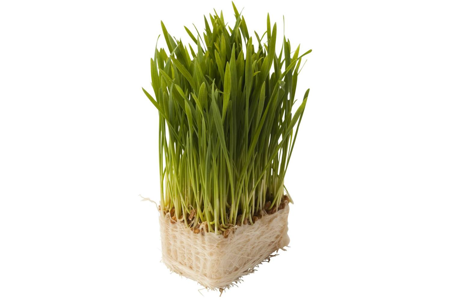 Wheat grass-tarwe stuk 1