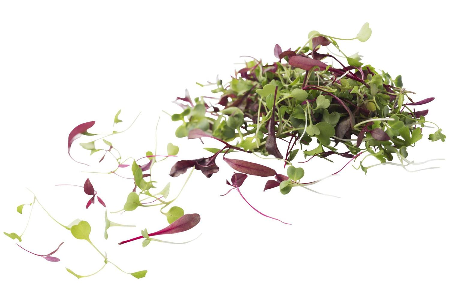 Micro leaves salad mix 30gr. stuk 1
